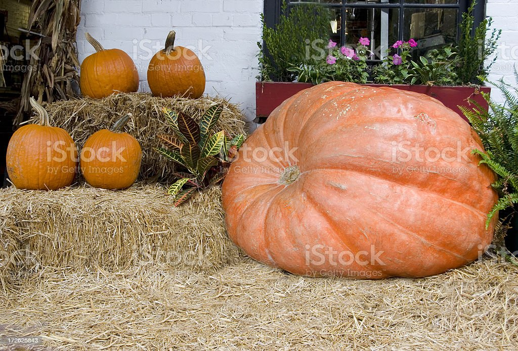 The Largest Pumpkin in Chatham County royalty-free stock photo