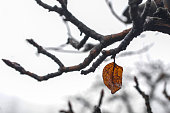 the last leaf on a branch