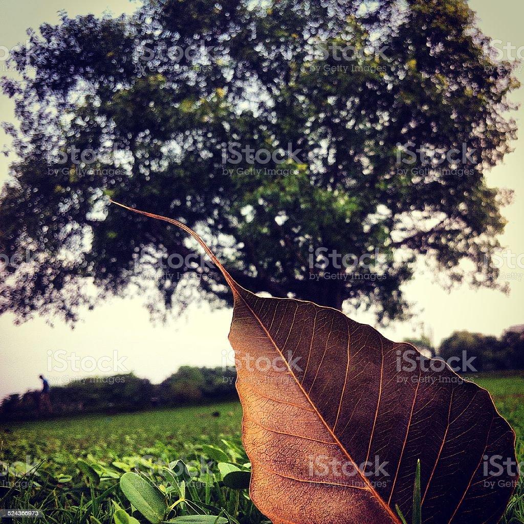 The last leaf... stock photo