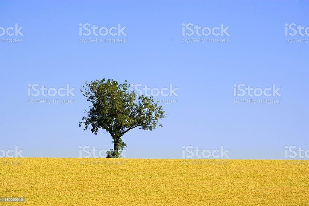The last tree royalty-free stock photo