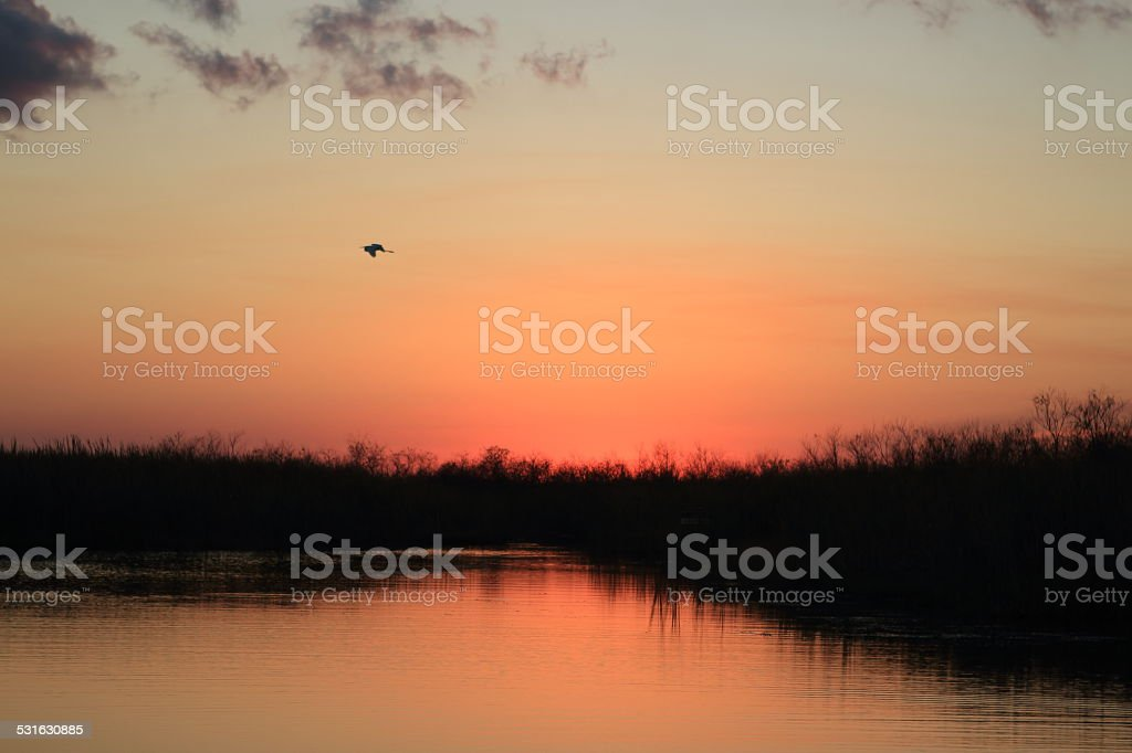 The last wings royalty-free stock photo