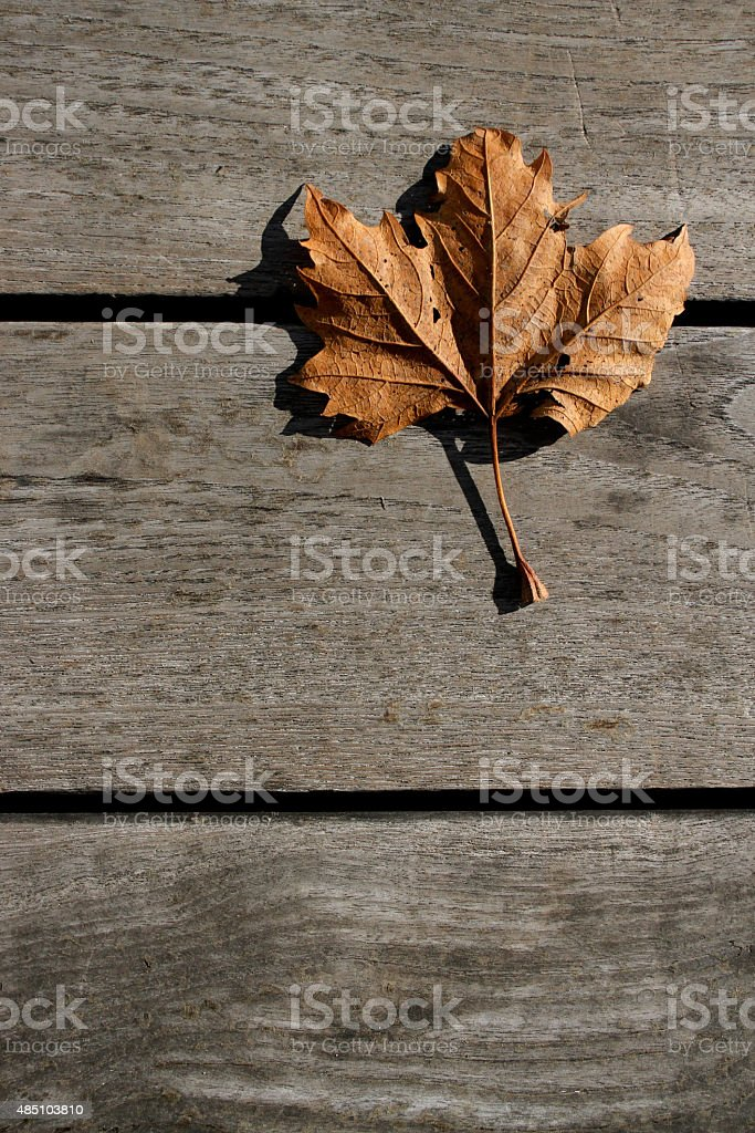 The leaf in the floor stock photo