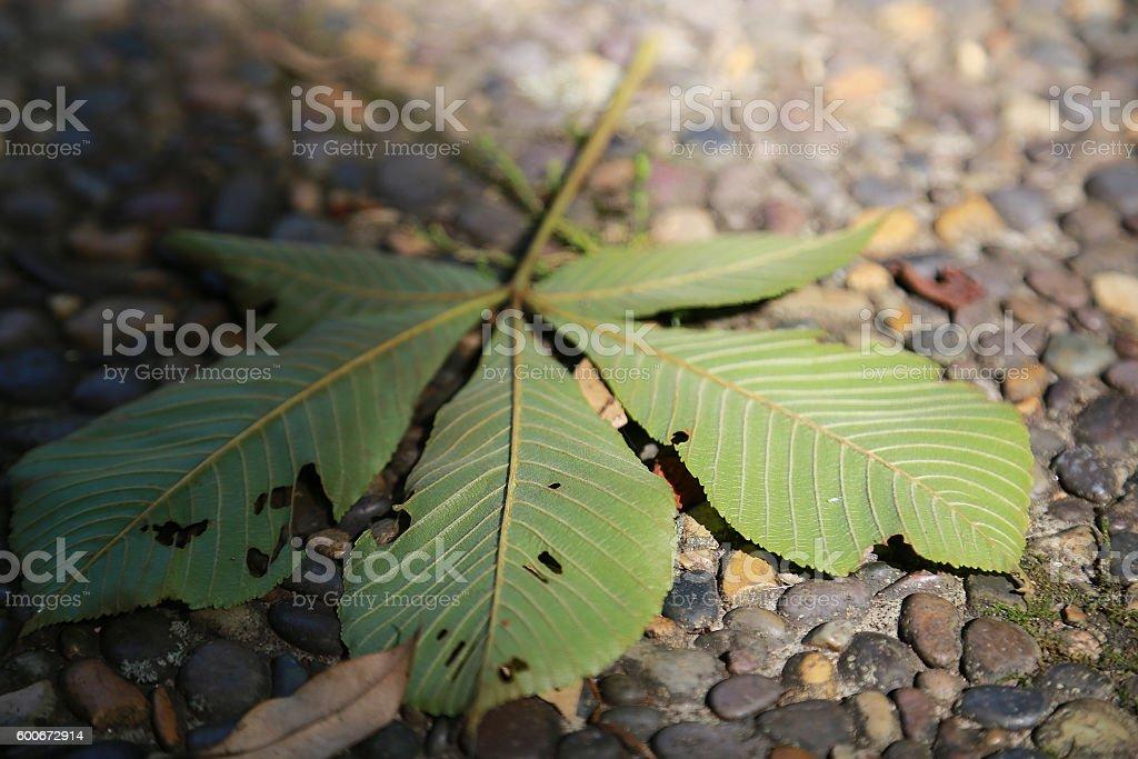 The leaf which fell into the ground foto de stock libre de derechos