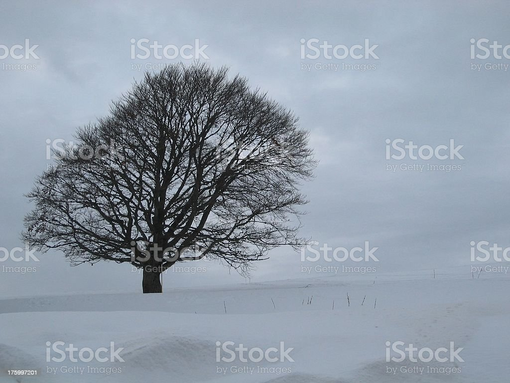 The leaning tree royalty-free stock photo