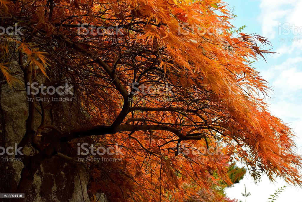 The leaves and fruits change color in Autumn Falls. stock photo
