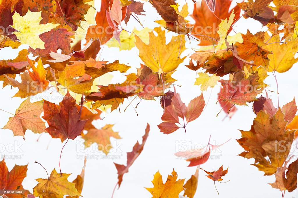 The leaves are Falling stock photo