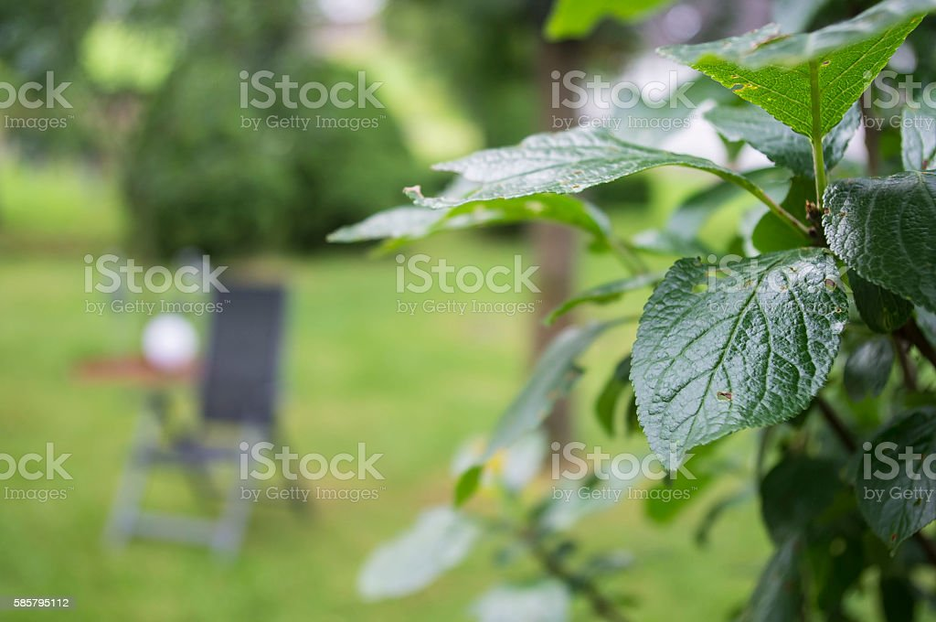 The leaves of the tree on the background. stock photo