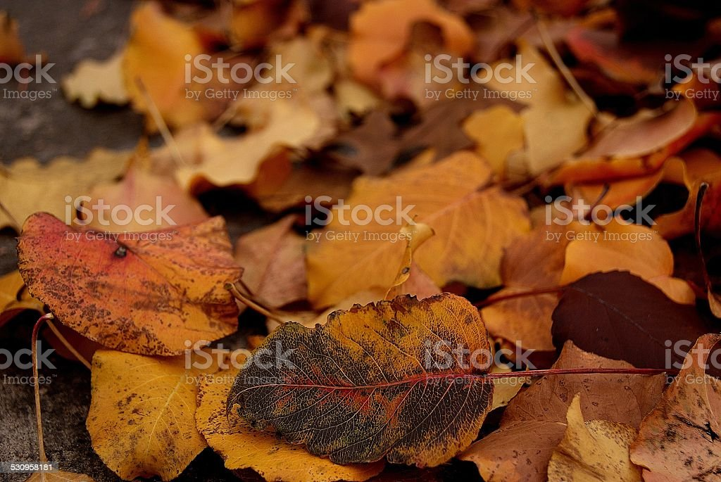 The Leaves of Winter royalty-free stock photo