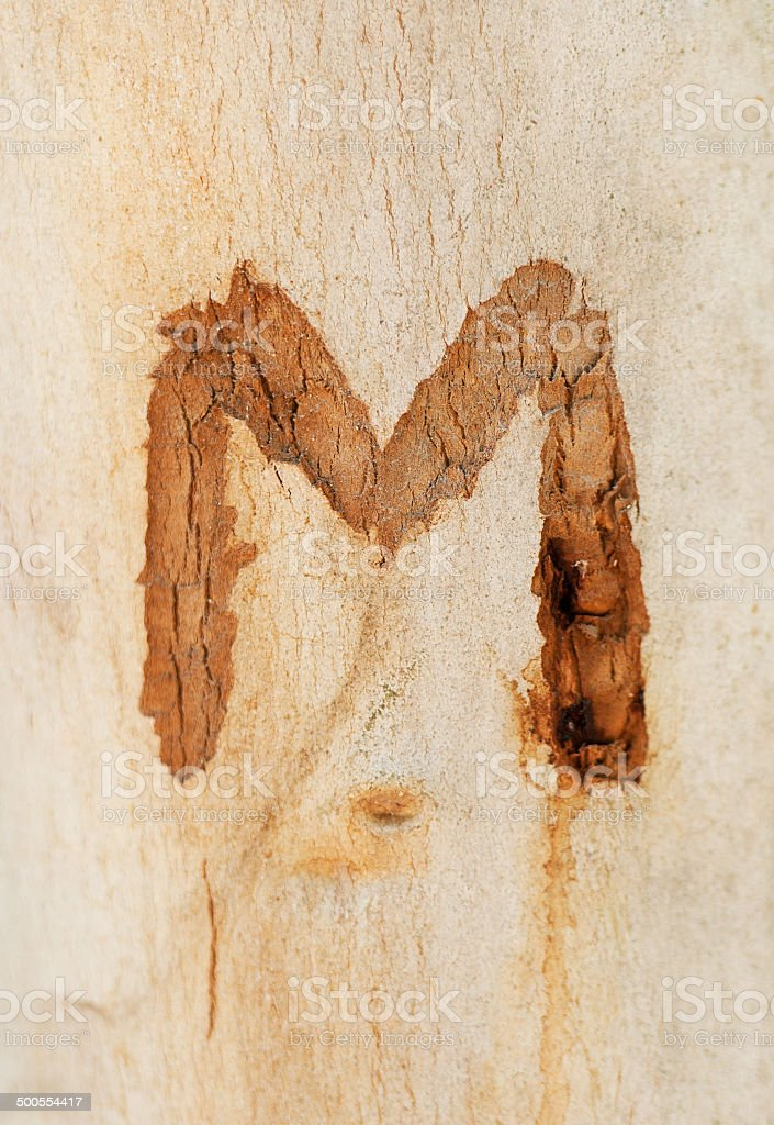 the letter M engraved in a tree trunk stock photo