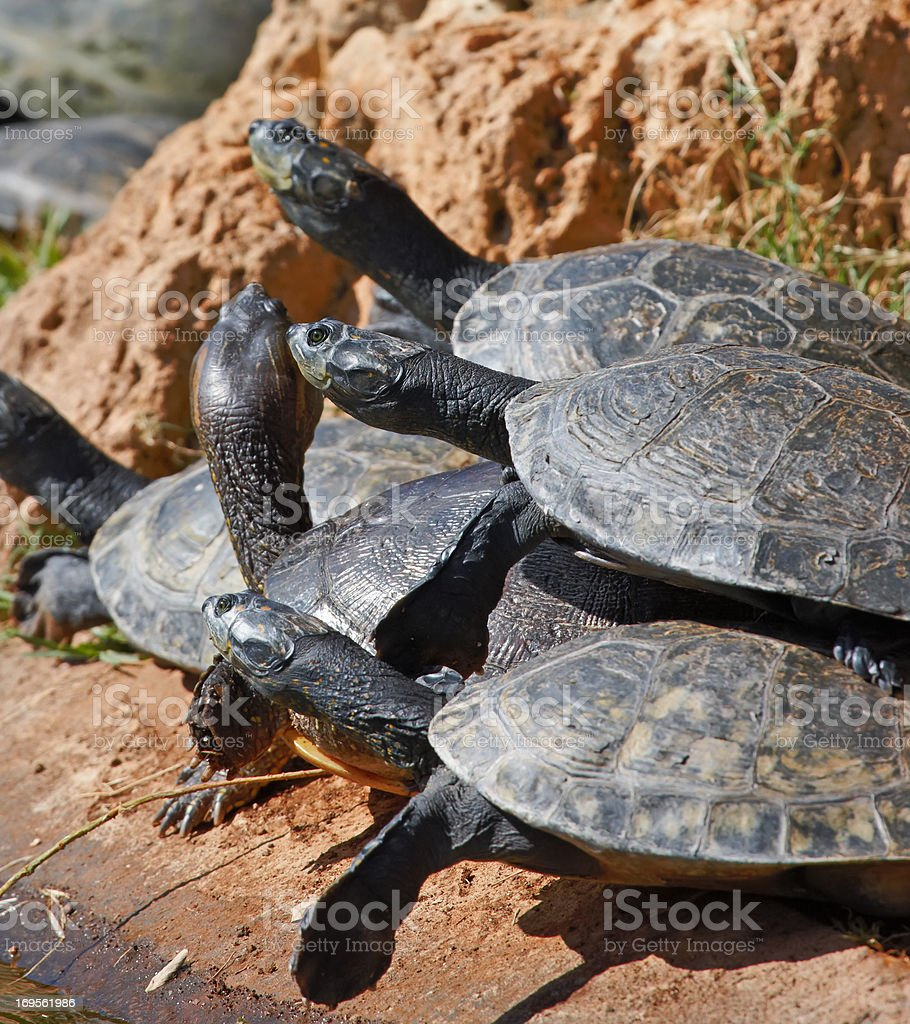 The life of a turtle - Reptiles stock photo