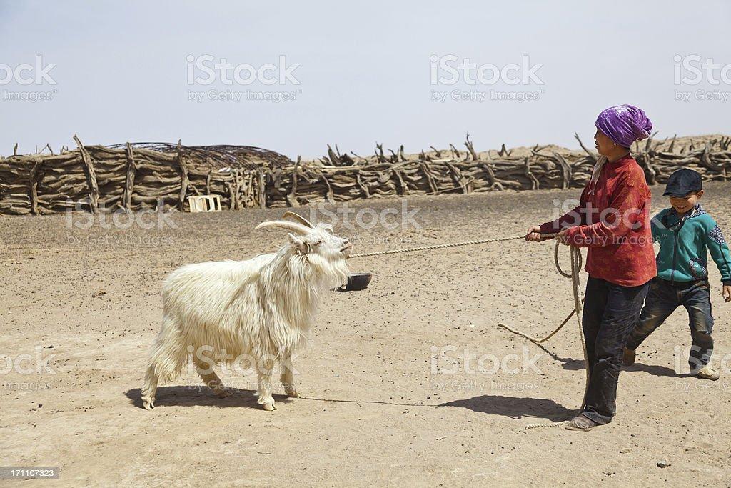 The lifestyle of herdsmen stock photo