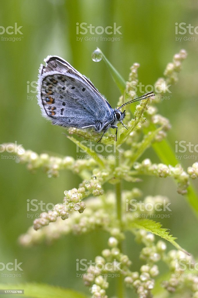 The light-blue butterfly. royalty-free stock photo
