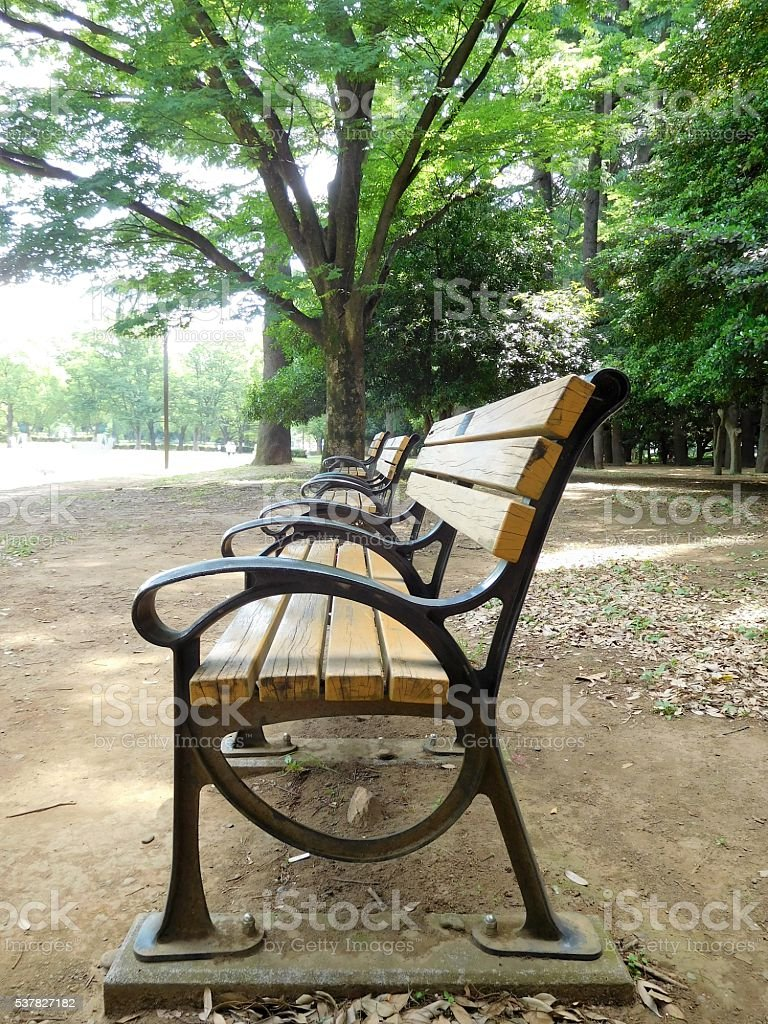 The lined benches in the forest park stock photo