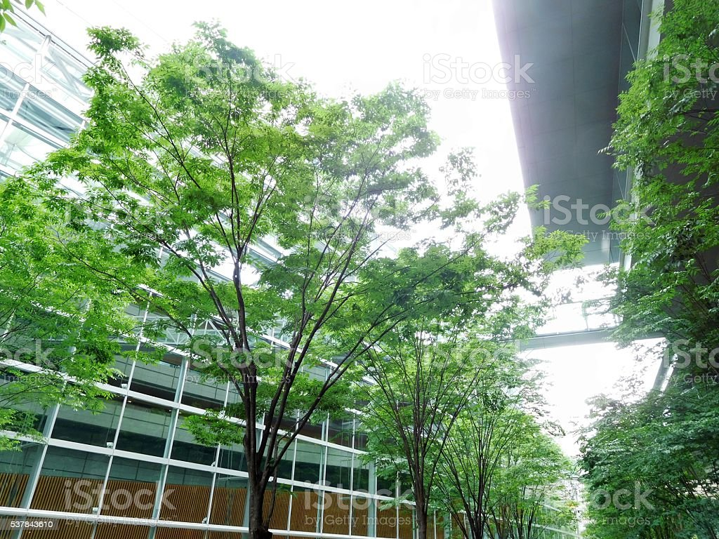 The lined trees between glassed buildings stock photo