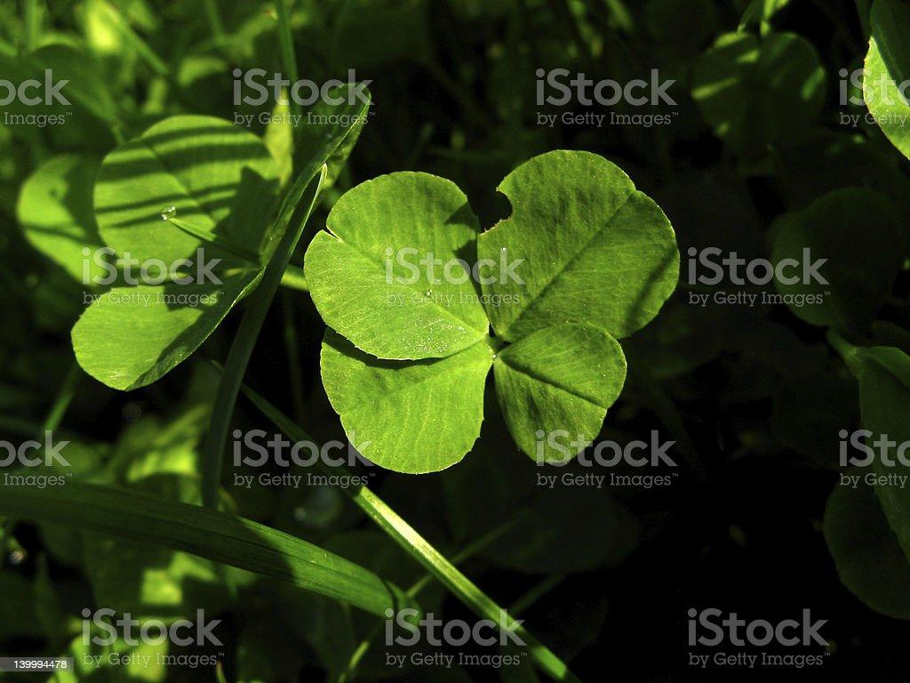 The Little Hidden Luck royalty-free stock photo