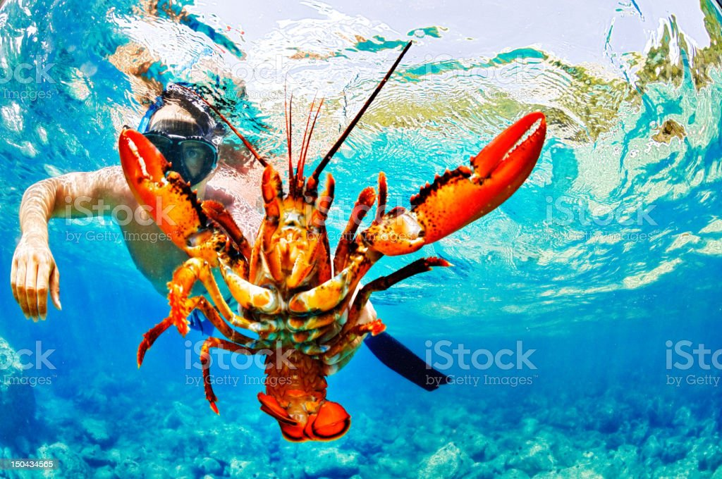 The Lobster royalty-free stock photo