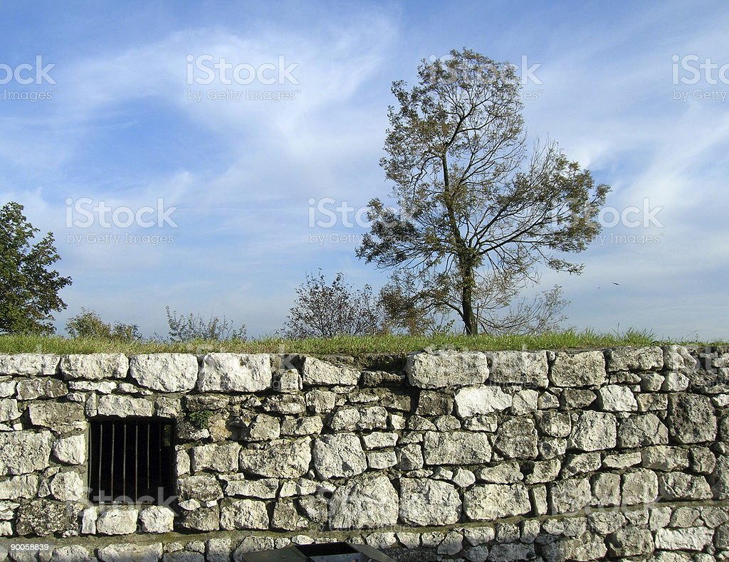 The Lone Castle Tree royalty-free stock photo