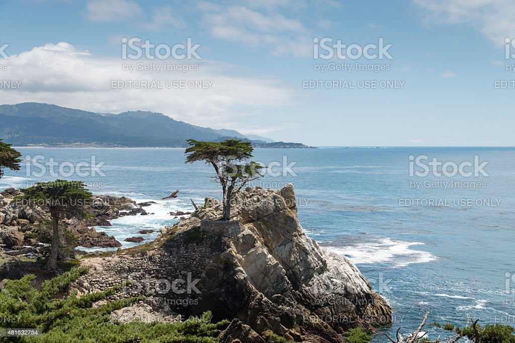 The Lone Cypress at 17 Mile Drive in Big Sur stock photo
