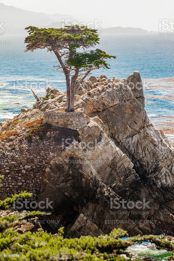 The Lone Cypress In Pebble Beach, California stock photo