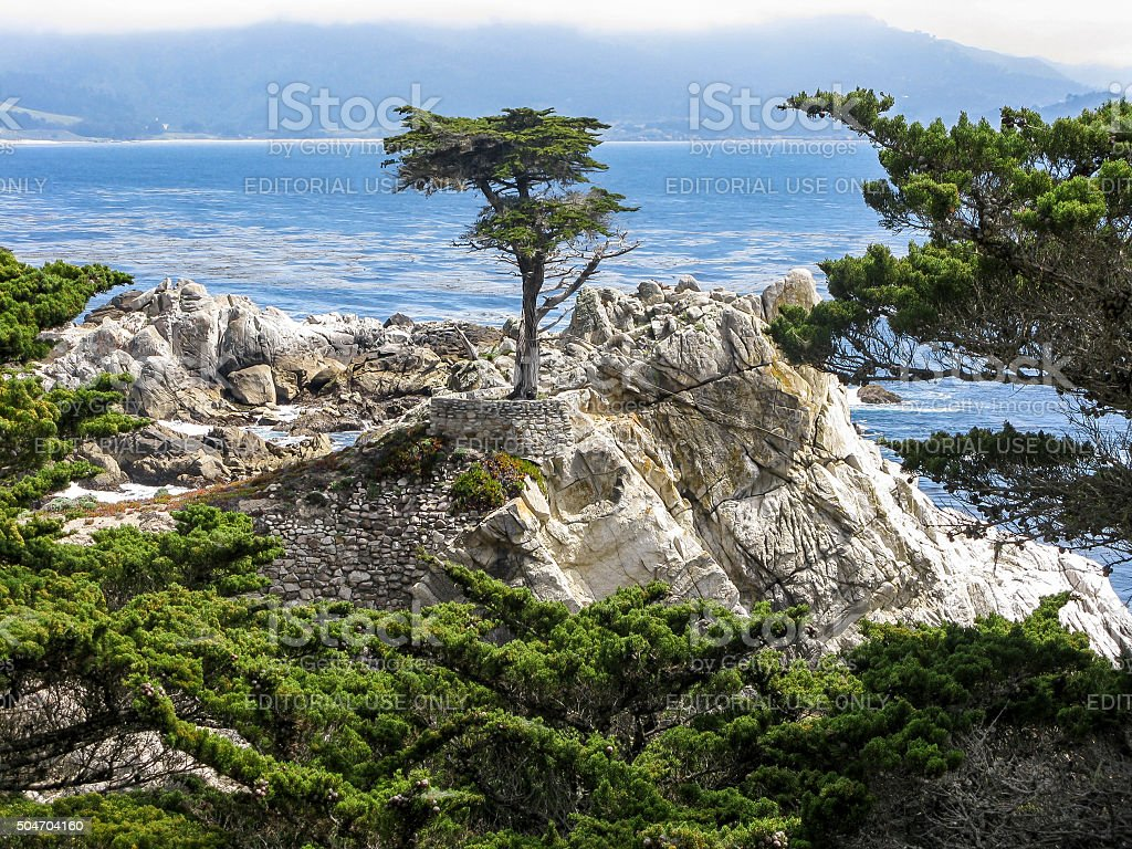 The Lone Cypress, Pebble Beach, California stock photo