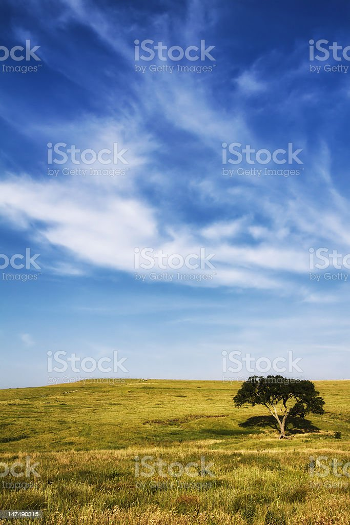 The Lone Tree royalty-free stock photo
