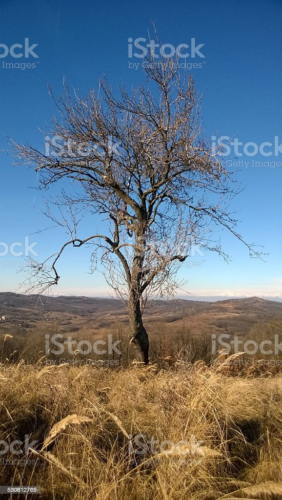 The lone tree up the hill royalty-free stock photo