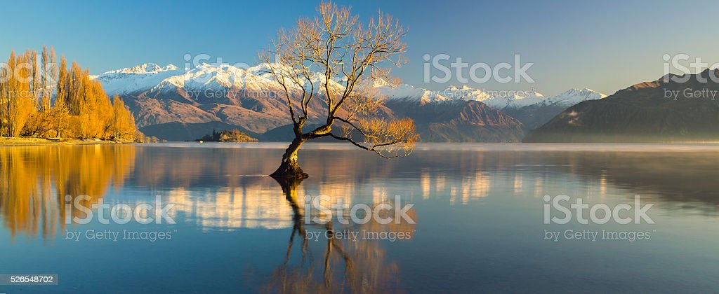 The Lonely Tree and The Remarkables ... stock photo