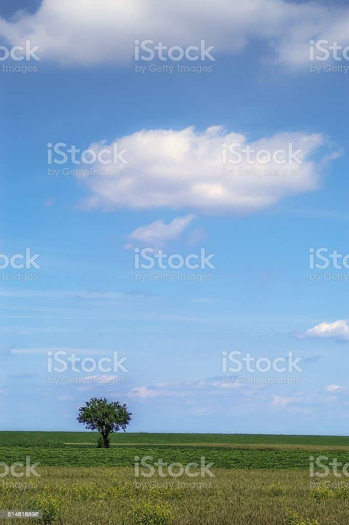 The lonely tree stock photo