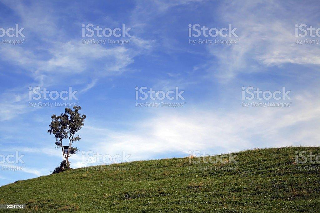 The lonesome tree stock photo