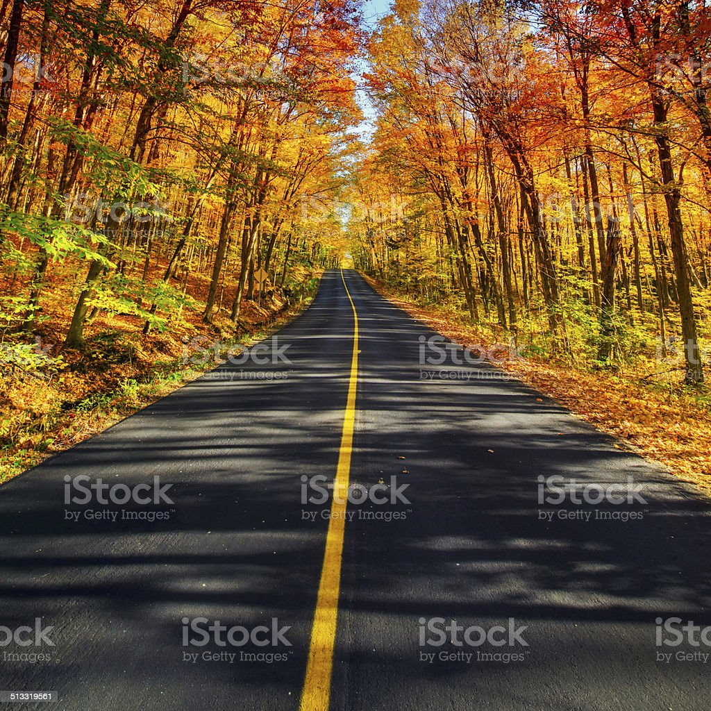 The Long Rural Autumn Road Corridor stock photo