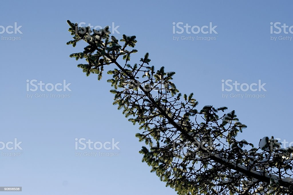 The longest branch royalty-free stock photo