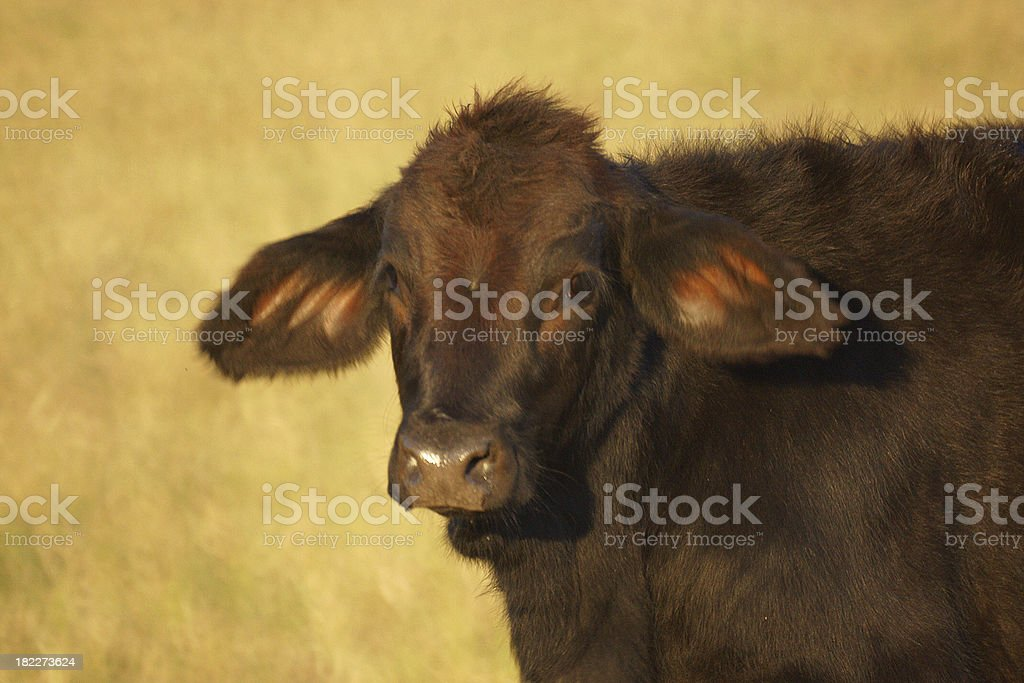 The look of innocense royalty-free stock photo