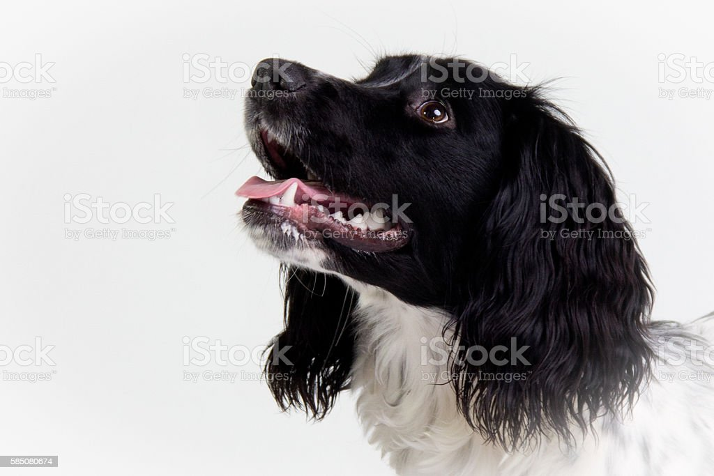 The look of love. stock photo