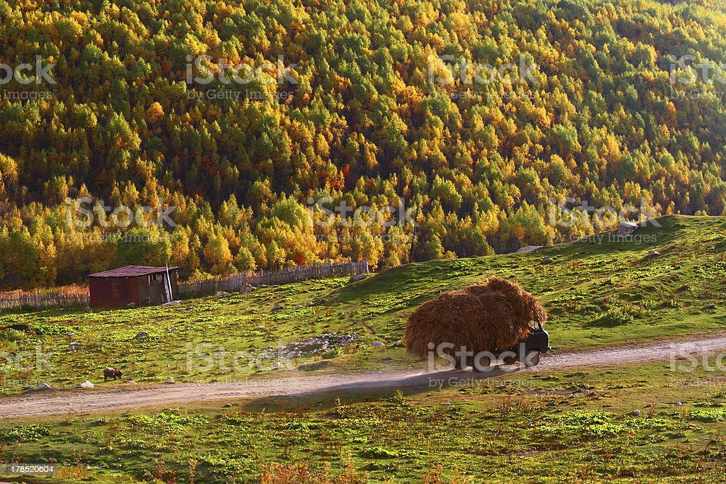 The lorry with hay royalty-free stock photo