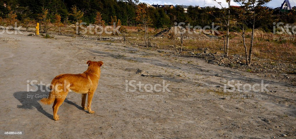 The lost puppy stock photo