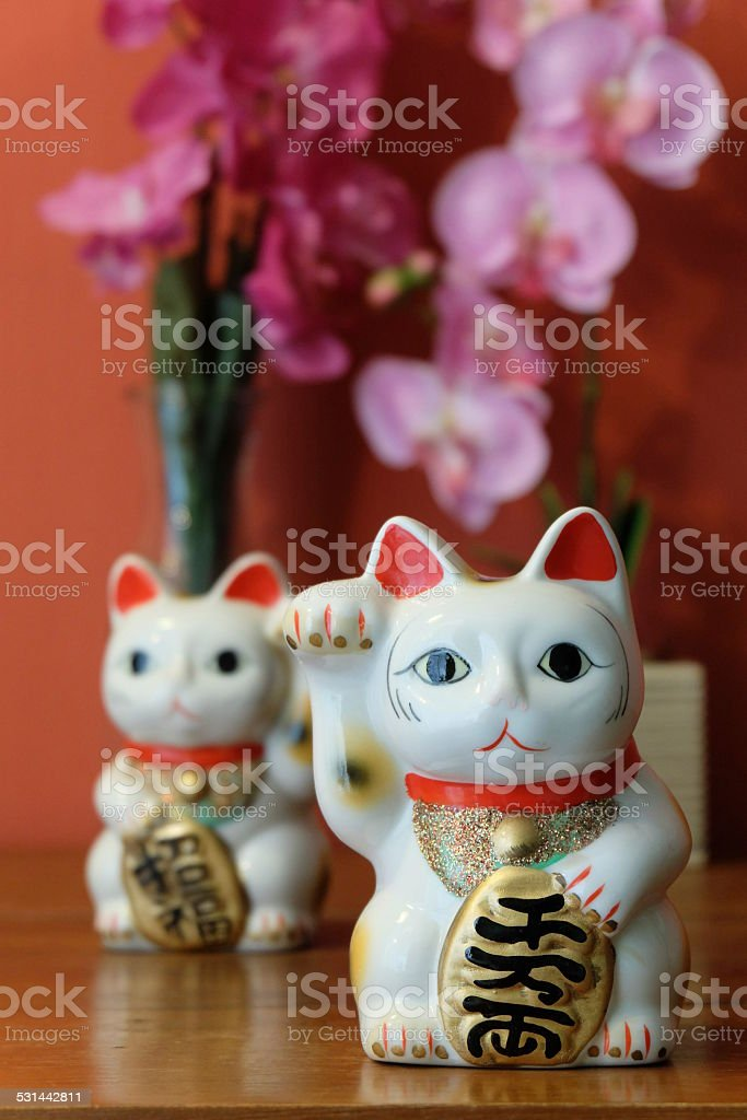 the lucky cat stock photo