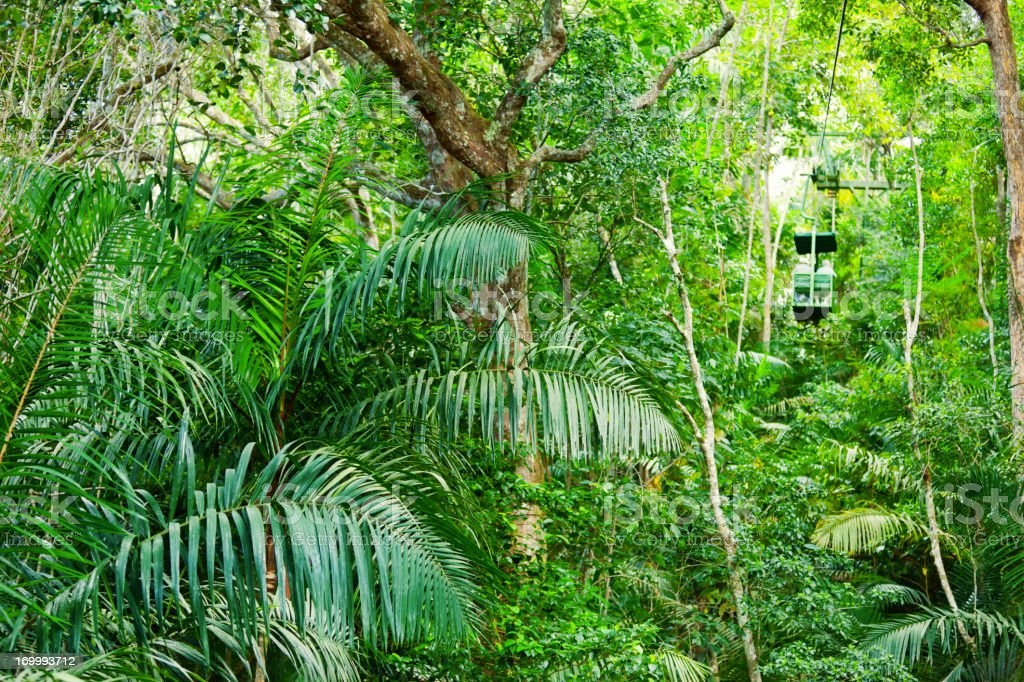 The lush green tropical rainforest in Central America stock photo