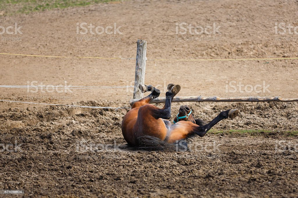 The lying horse stock photo