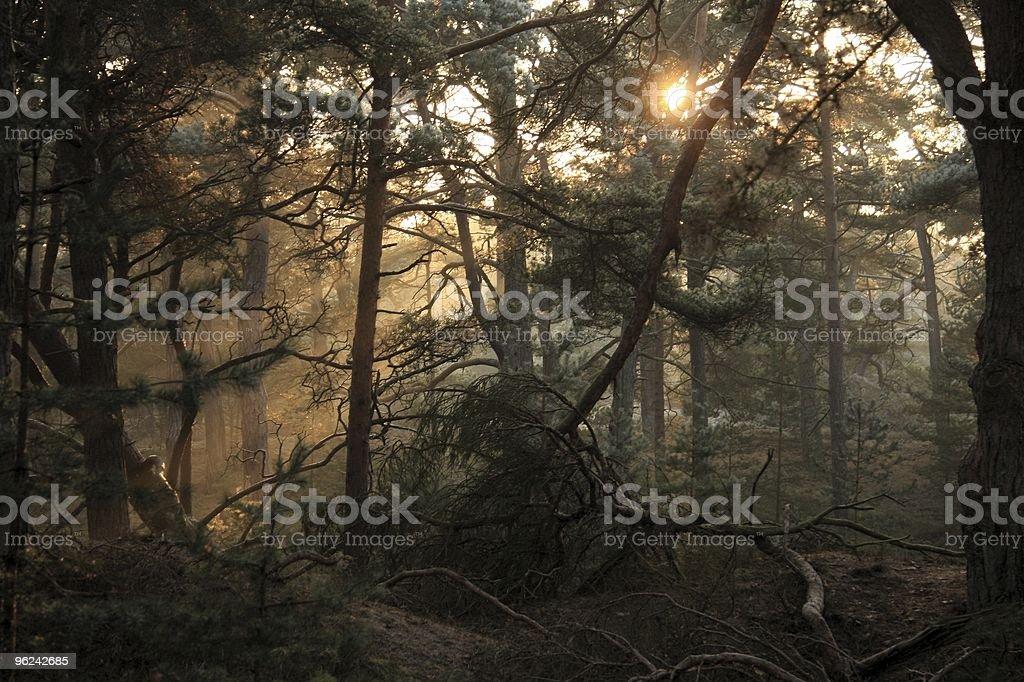 the magic of nature stock photo