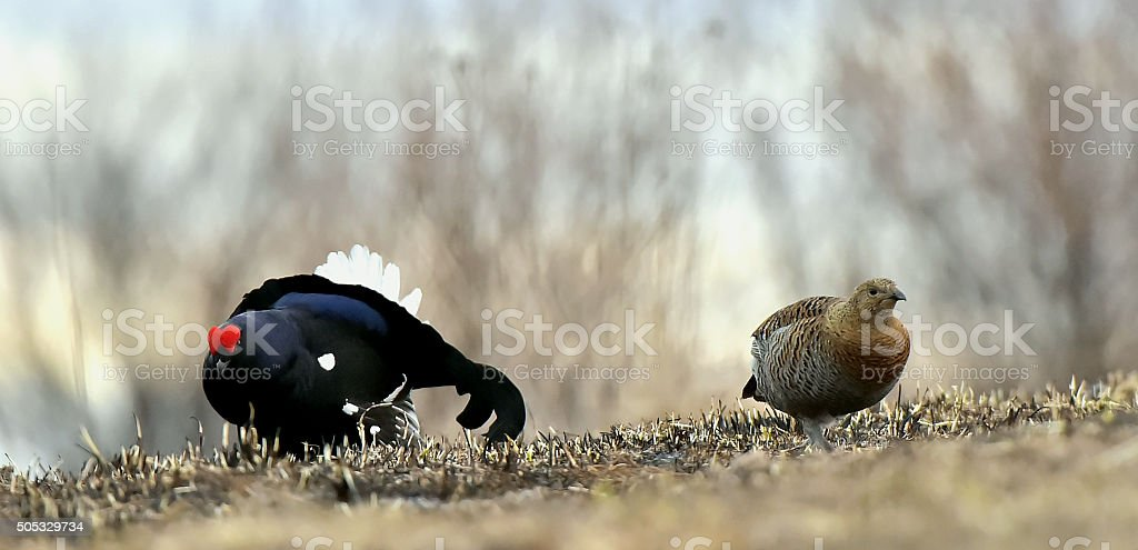 The Male and female. stock photo