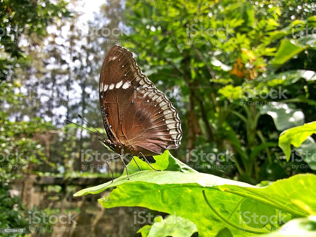 The male butterfly on green leaf stock photo
