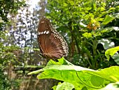 The male butterfly on green leaf
