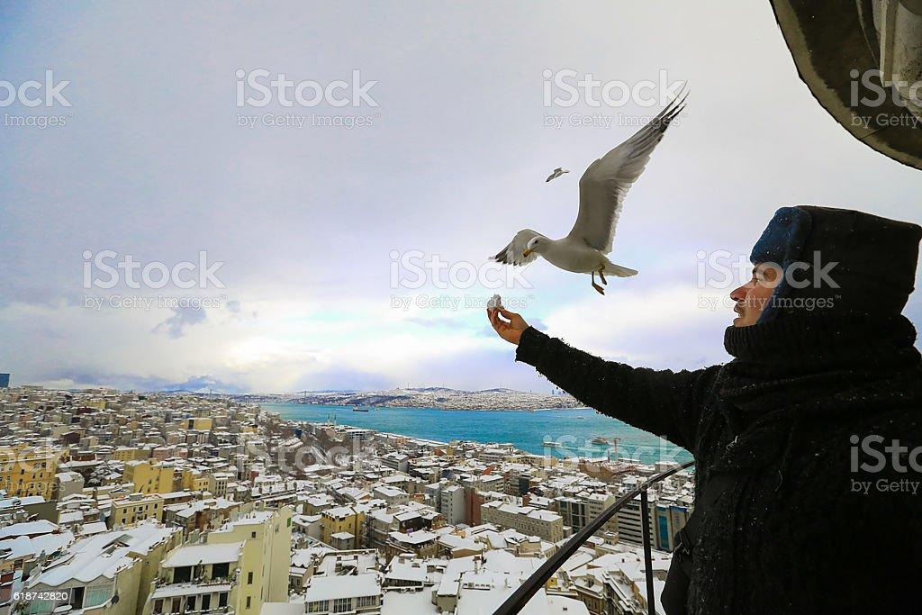 The man feeding seagulls stock photo