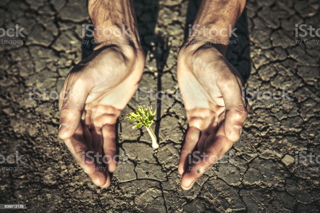 The man hand holding a green plant stock photo