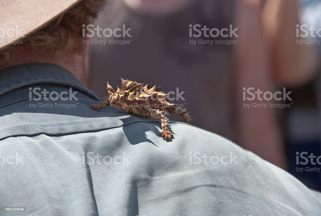 The man with a lizard stock photo