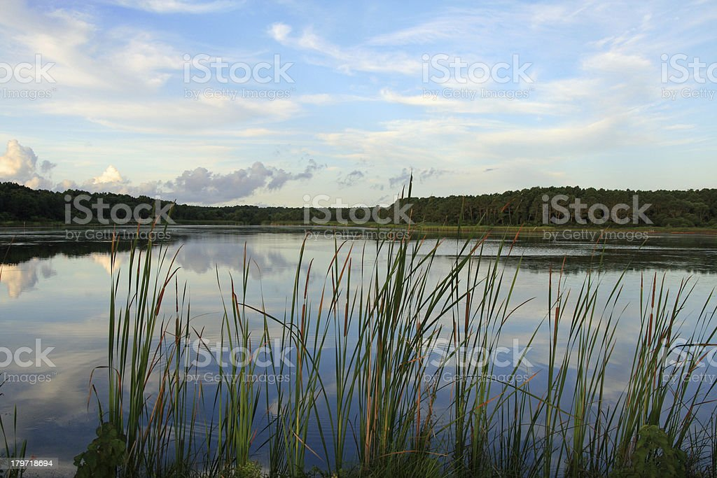The Marsh At Huntington State Park, SC royalty-free stock photo