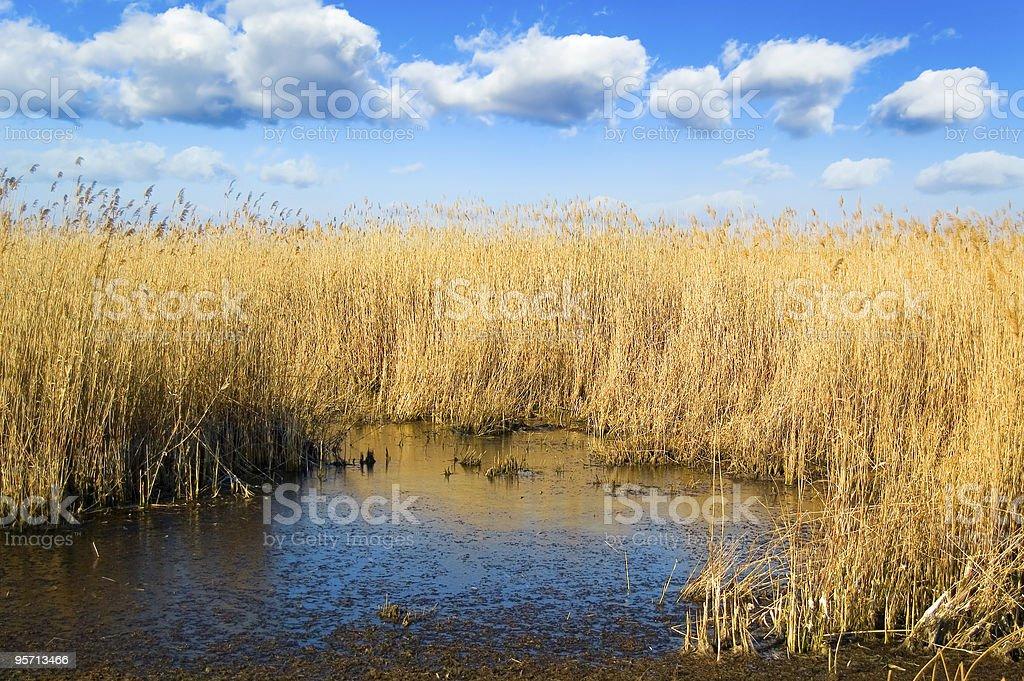 The marshland. royalty-free stock photo