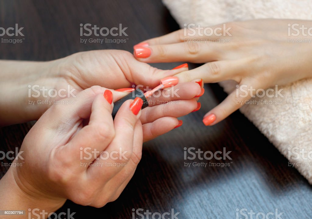 The master of the manicure paints nails with nail polish during the procedure of nail extensions with gel stock photo