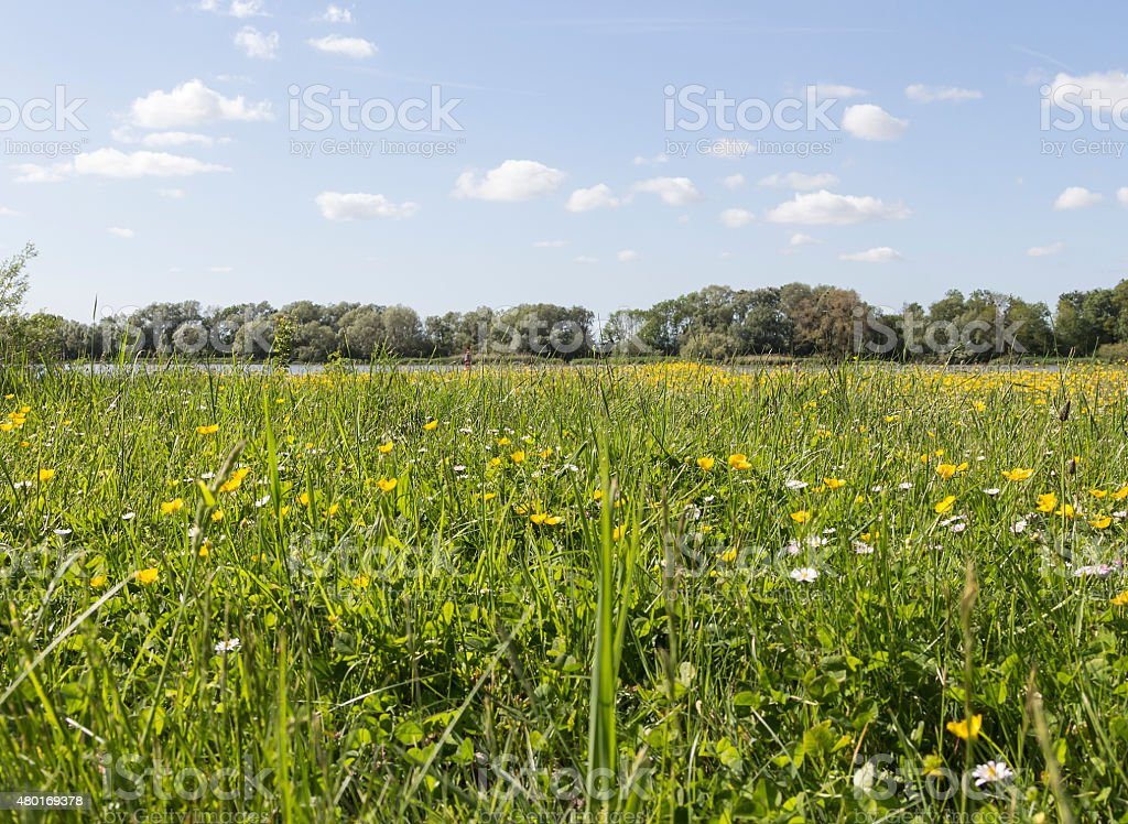 The meadow close to Seine royalty-free stock photo