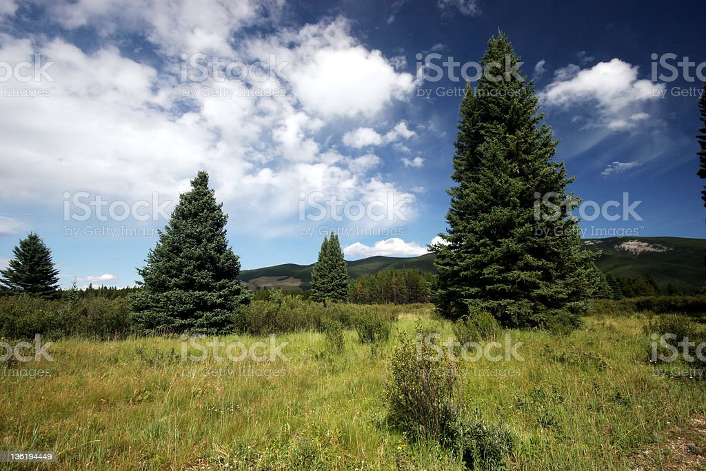 The Meadow royalty-free stock photo